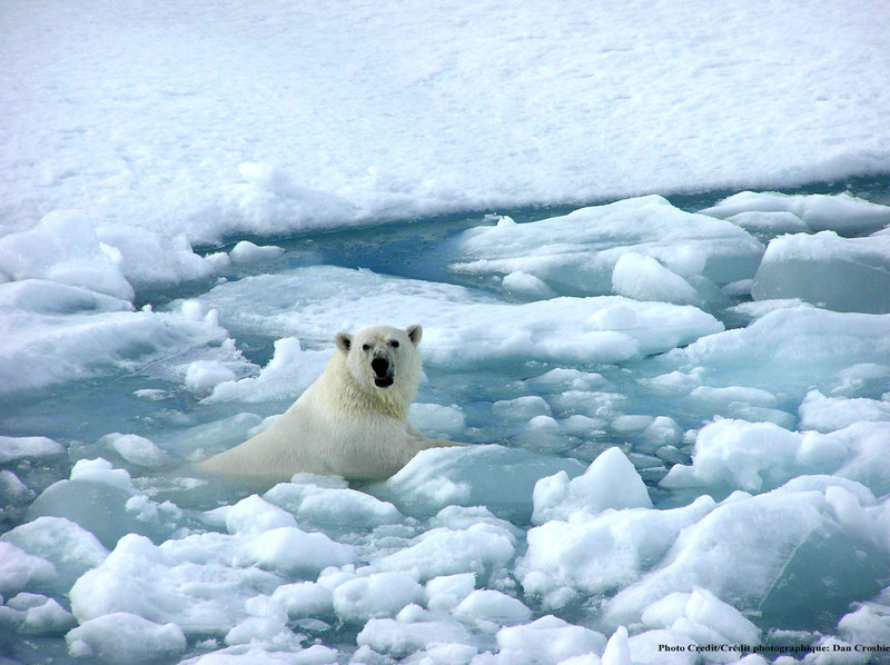 polar bears global warming research papers Argumentative research paper topics  the global warming controversy focuses on the speed of change in climate and the extent humans cause it and can remedy it .